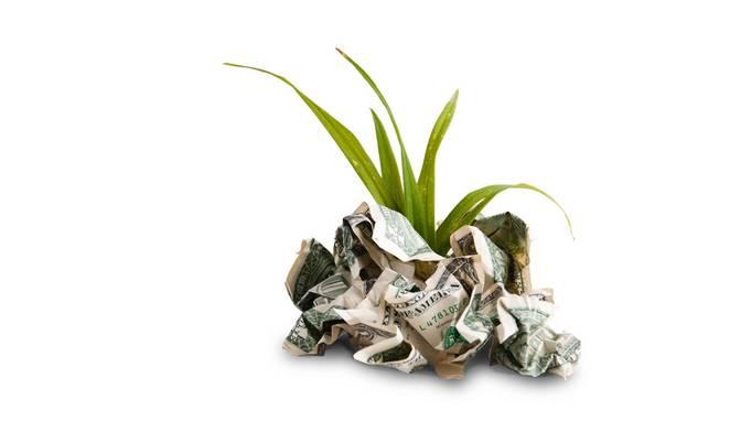 money vs plant